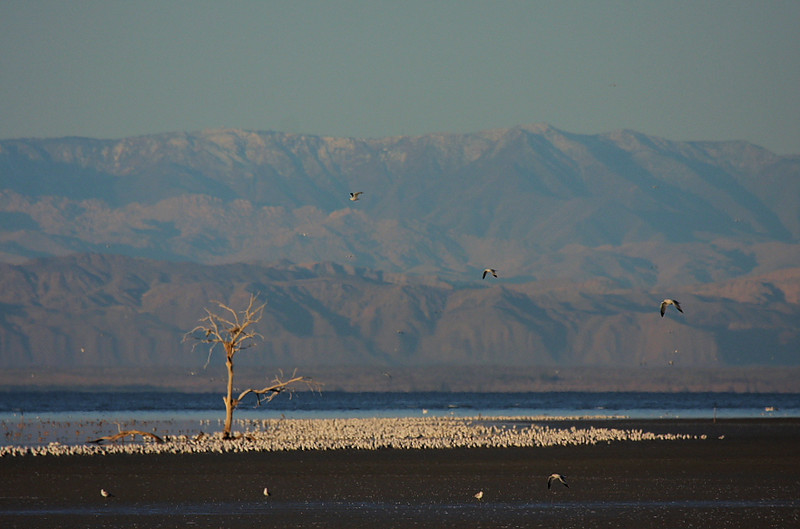 The starkly-beautiful Salton Sea landscape.
