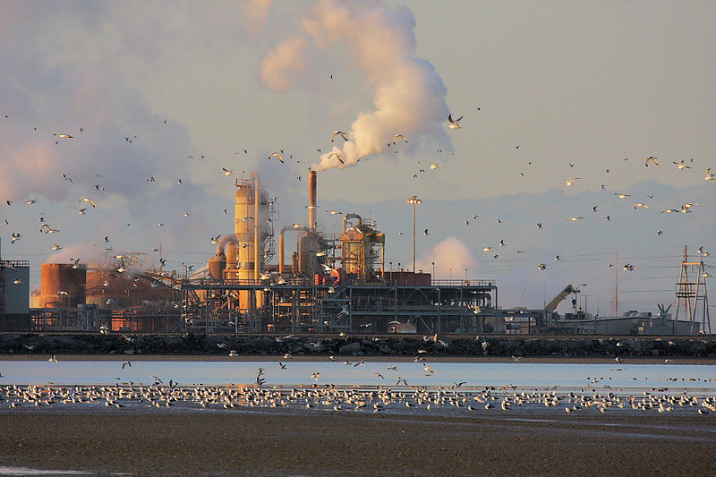 The Salton Sea is a fascinating mixture of industry and nature co-existing. Here's one of the thermal power plants on the south end of the Sea, along with scads of (mostly) gulls.