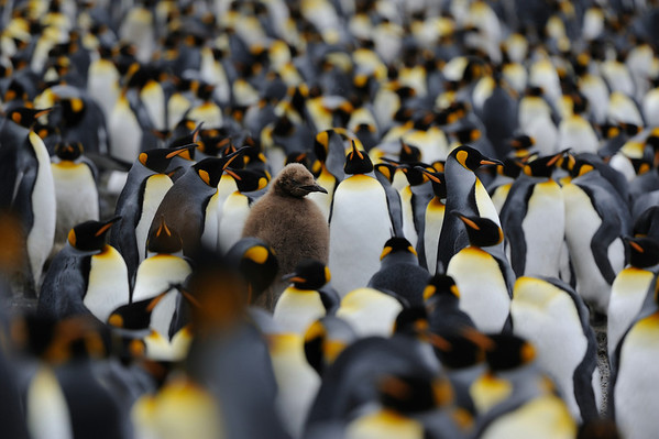 The Subantarctic Islands of New Zealand and Australia