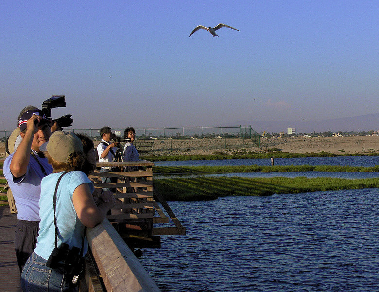 Some Big Lens folks were out on the Bolsa Chica walkway...
