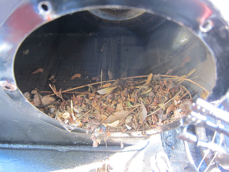 Local flora in my heater plenum.