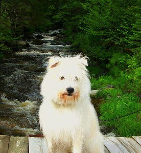 Charlie at Little Hellgate Brook