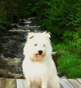 Charlie at Little Hellgate Brook