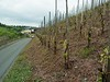 Vineyards on the steep banks along the Mosel.