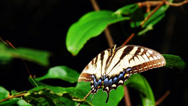 Butterfly @ Monte Sano State Park. Alabama (2007).