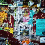 Lost Dog Collage