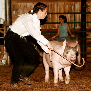 Danielle Brosey with Hanover Herders tries to control the direction of a swine during the Showman of Showmen competition Thursday at the BC Fair.  The competition pits the best showman of each animal category against each other, but showing animals they otherwise would not handle.<br /> e.l. hubbard foto