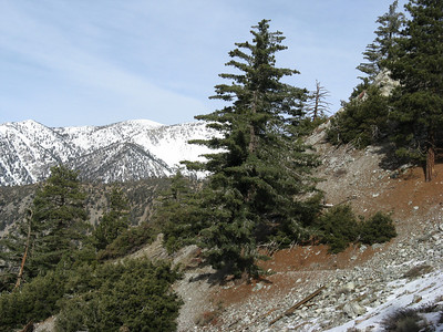 Timber Mtn via Icehouse canyon