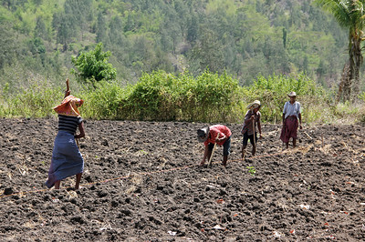 planting corn in rural ainaro district