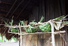 chicken nests