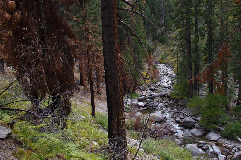 woods creek