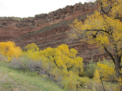Because these Aspens are protected in this valley they still have their leaves.
