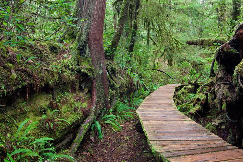 Rainforest boardwalk, Tofino, British Columbia