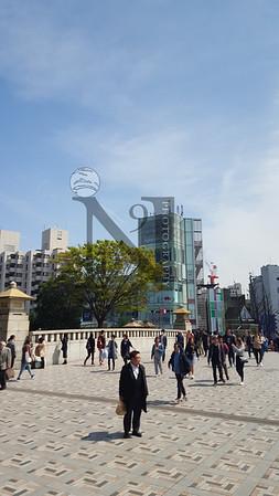 TsujikiFishMarket Tokyo-103459