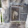 """Inside the bear pen. <a href=""""http://www.alaskazoo.org/live-polar-bear-camera"""">http://www.alaskazoo.org/live-polar-bear-camera</a> for a live feed."""