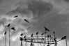 Evening crows and storm. Kathmandu, Nepal.