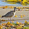 Bird in Kelp.