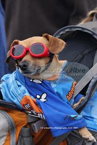 Stage 7-The Great Chiweenie, race fan