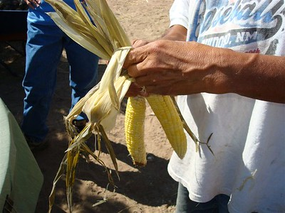 Braiding corn.
