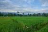 Lowland, grass/swamp land.