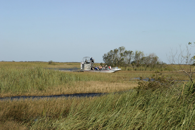 An airboat, powered by a huge propeller, is jetting across the Florida Everglades.