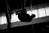 trapeze-022511--6350