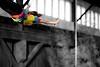 trapeze-022511--6291