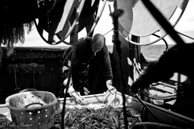 A bord d'un chalutierdu Guilvinec.