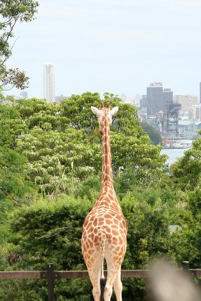 Sydney, Australia, Sydney Zoo