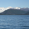 Kenai Fjords Tour - Scenery