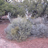 Canyonlands National Park - The others of the 4 deer we saw