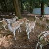 adirondack_animal-320