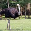 adirondack_animal-433