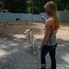 adirondack_animal-307