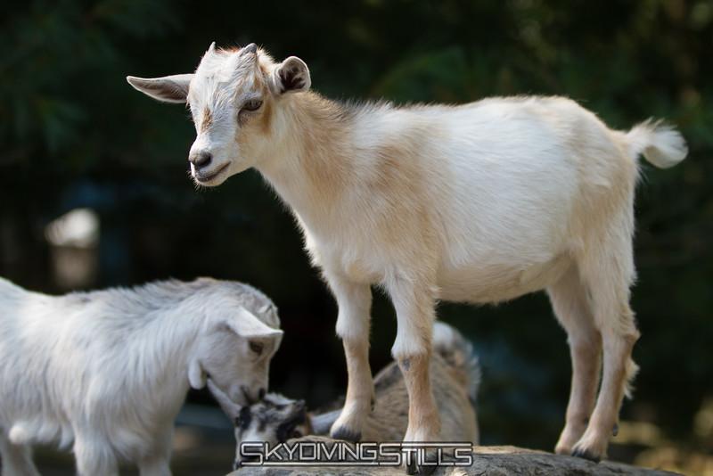 adirondack_animal-024