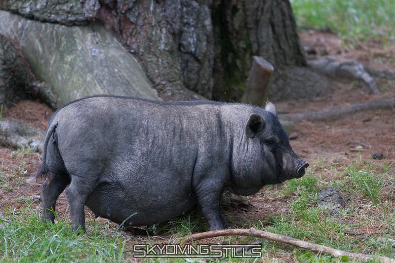 adirondack_animal-503