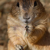adirondack_animal-387