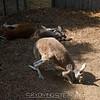 adirondack_animal-346