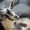 adirondack_animal-027