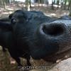 adirondack_animal-227