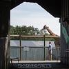 adirondack_animal-347