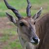 adirondack_animal-510