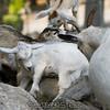 adirondack_animal-022