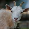 adirondack_animal-425