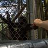 adirondack_animal-077