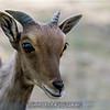 adirondack_animal-154