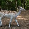 adirondack_animal-312