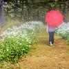 Jessica in the Rain