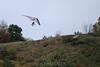 2012-09-29_paragliding_1611