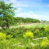 Grosse-Ile Landscape